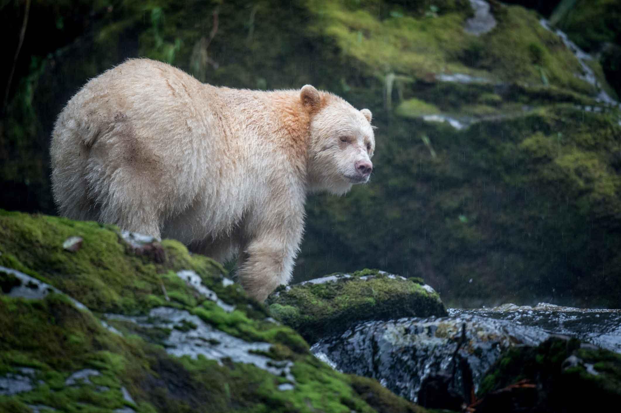 Bearforest login