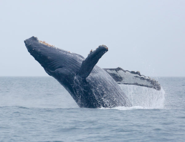 Join The 2018 Pacific Rim Whale Festival