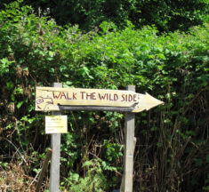 Take A Hike On The Wild Side
