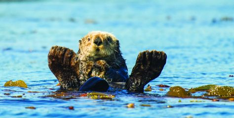 Visit Sea Otter Country