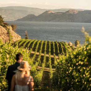 Evolve Cellars Vineyard on Okanagan Lake.
