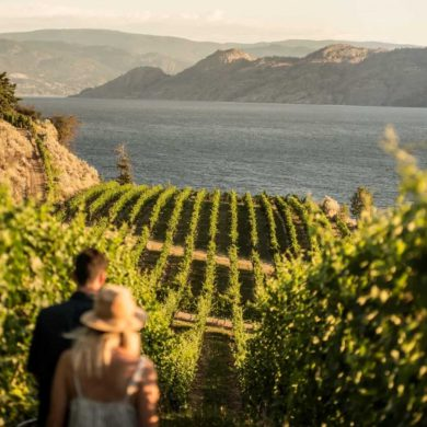 Evolve Cellars Vineyard on Okanagan Lake.
