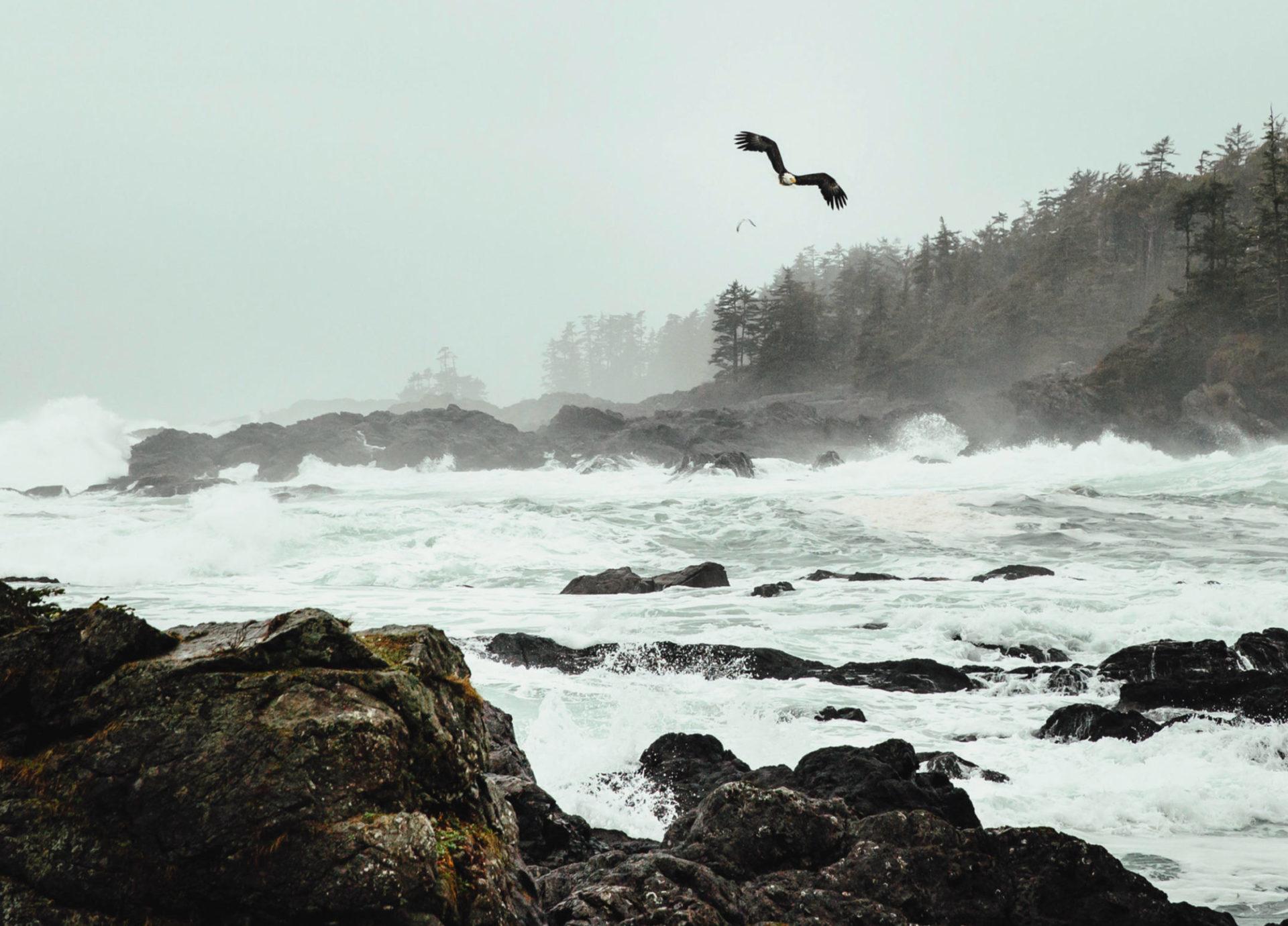 Eagle. Photo by Destination BC/Mike Seehagel.