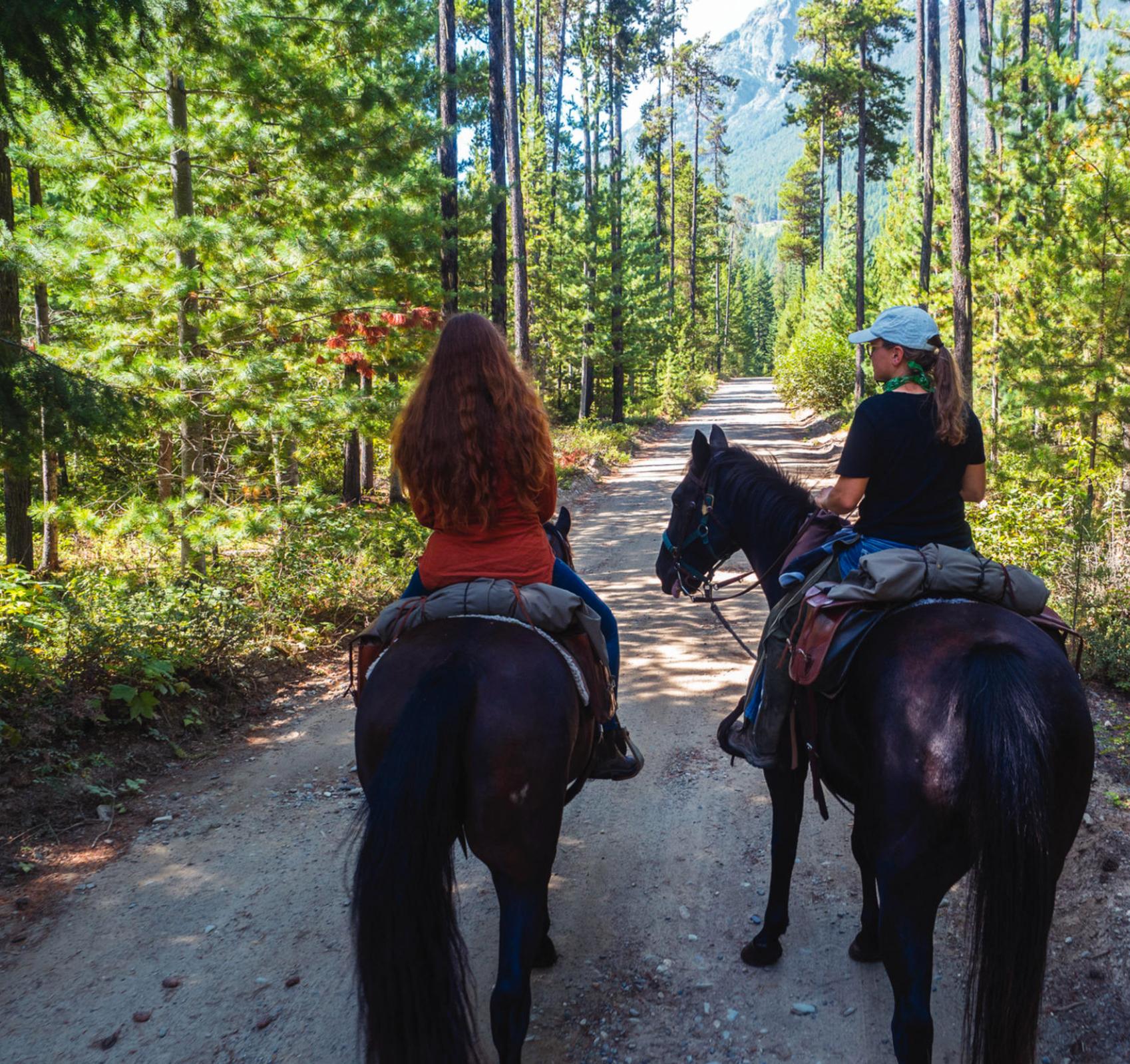 Horses. Photo by Diane Selkirk.