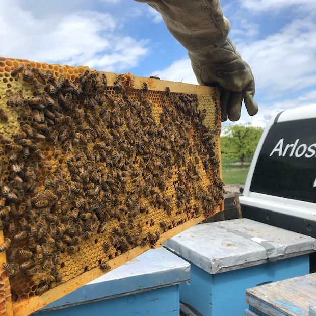 Arlo's Honey Farm.